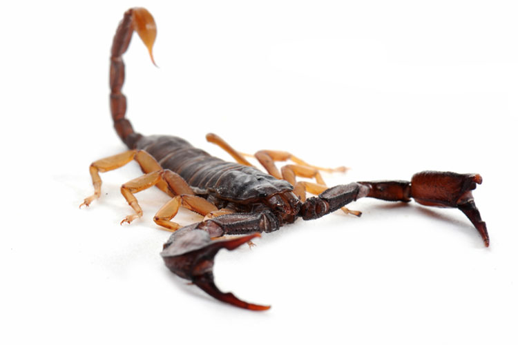 How to Keep Scorpions out of your Bed